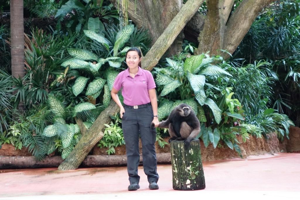 シンガポール動物園:ショーのイメージ3