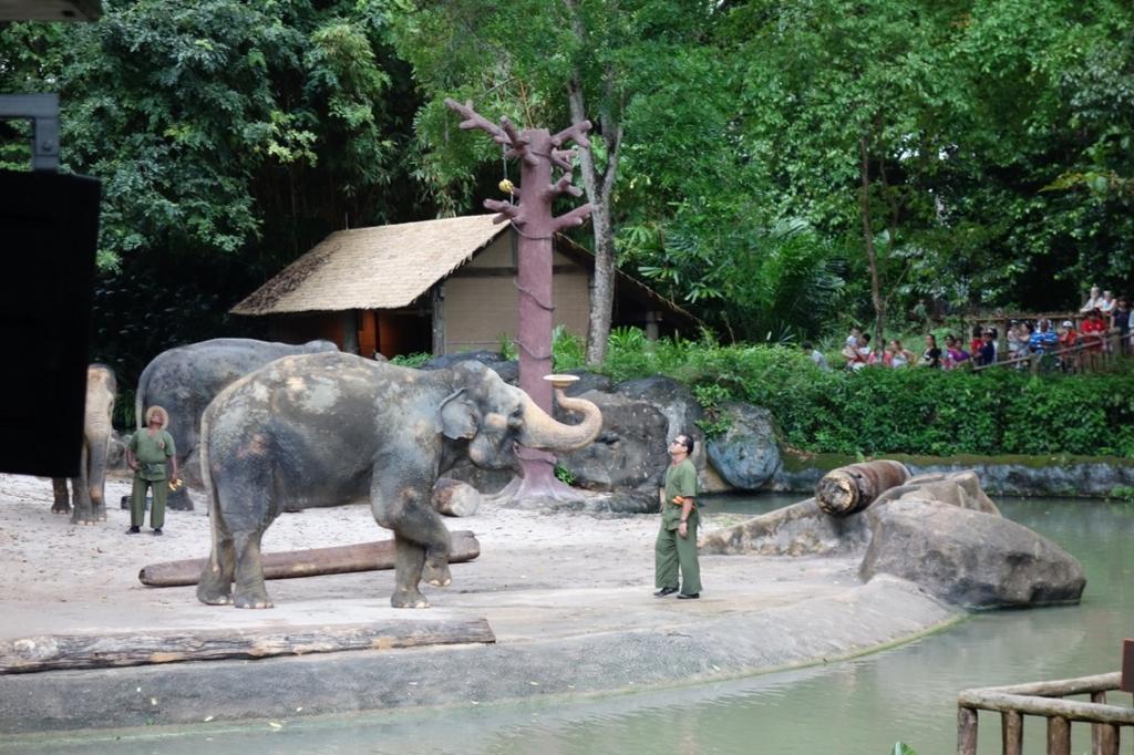 シンガポール動物園:ショーのイメージ10