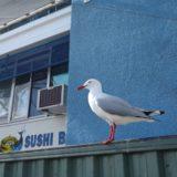 シドニー フィッシュマーケットの行き方と牡蠣(オイスター)の値段は?食べ歩きレポート!<シドニー旅行記>
