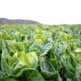 ユーグレナの緑汁 抹茶仕立てが実質無料の100%還元で購入可能!<ライフメディア>