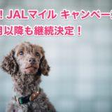 JALマイル キャンペーンは4月以降も継続決定!交換レート80%を維持!<モッピー>